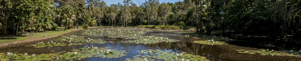 jardin-botanico-cairns